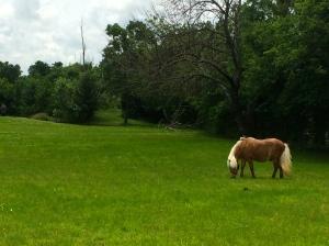 Made a pony friend!